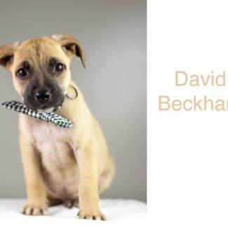 David Beckham (Becks)