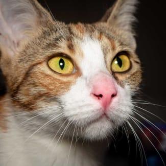 Lillyanne **Visit me at Pet Stock Cannington**