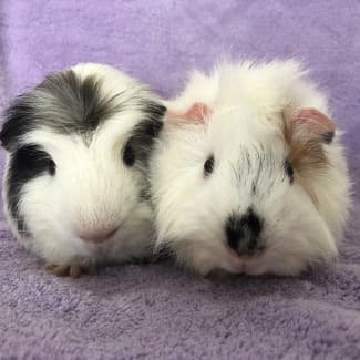Elvis and Sam