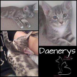 Dearneys