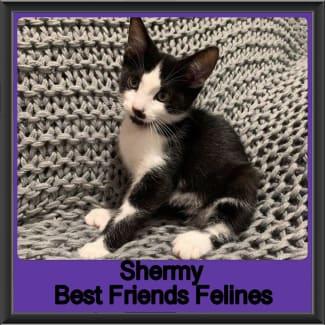 Shermy