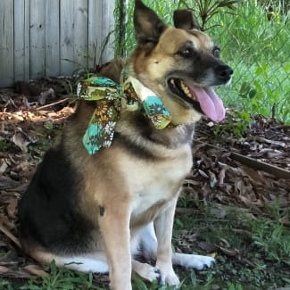 Tia (adoption pending)