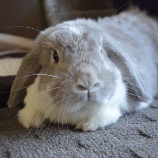 Thumper Scobi