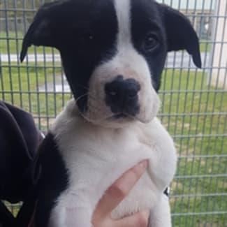 Freya's puppy