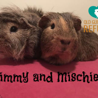 Jimmy and Mischief