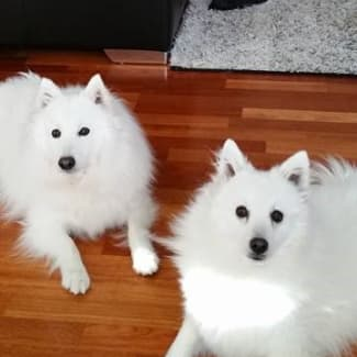 Yuki and Ghost