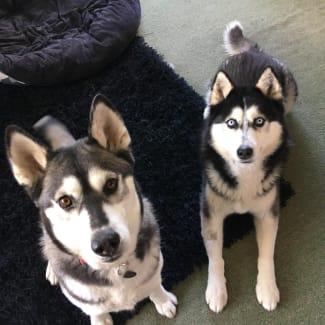Rocky & Mika