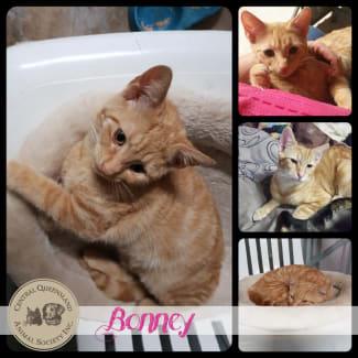 Bonney