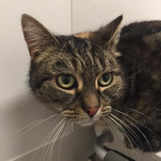 Miss Kitty Le Purr - Located in Reservoir