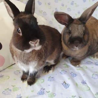 Manchee & Thumbelina