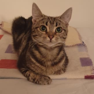 Pennie (Located in Ringwood East)