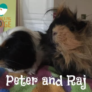 Peter and Raj