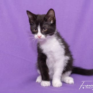 Jinger **2nd Chance Cat Rescue**