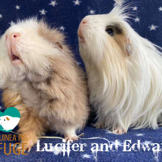 Lucifer and Edward (indoor home only)