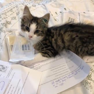 Jaskier **2nd Chance Cat Rescue**