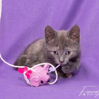 Jordyn ** 2nd Chance Cat Rescue**