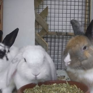 Attila, Eleven & Sophie