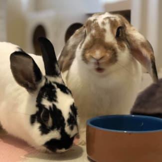 Bugsy & Sage (Bonded Pair) 🥕🥕