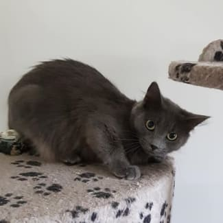 Marsha **2nd Chance Cat Rescue**