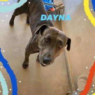 Dayna  DG20-131