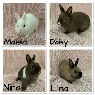 Lina, Nina, Maisie, Daisy