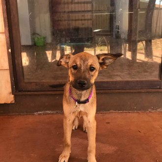 Medium Female Mixed Breed Dog