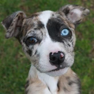 Large Female Cross breed Dog
