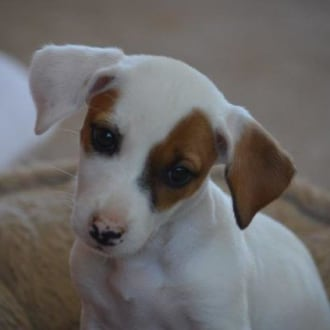 Small Female Mixed Breed Dog