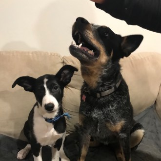 View all recently adopted pets!