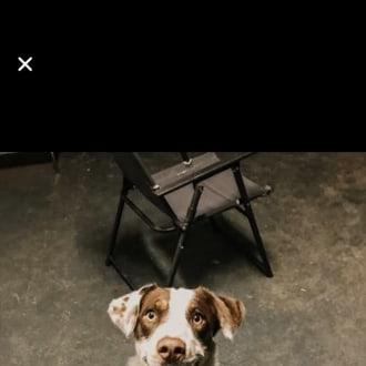 Medium Male Border Collie Dog
