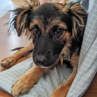 Small Male Mixed Breed Dog