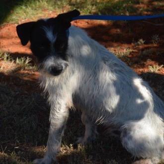 Medium Male Mixed Breed Dog
