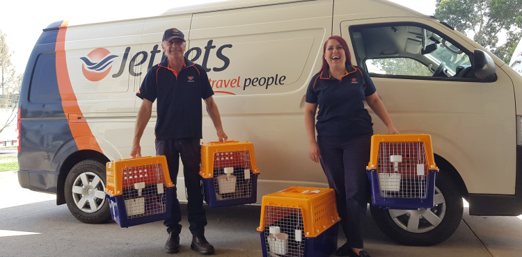 Bushfire-affected rescue cats are looking for love!