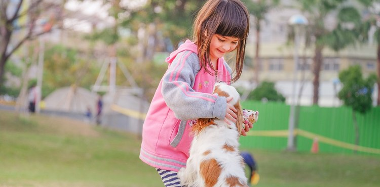 Discover rescue pet foster care
