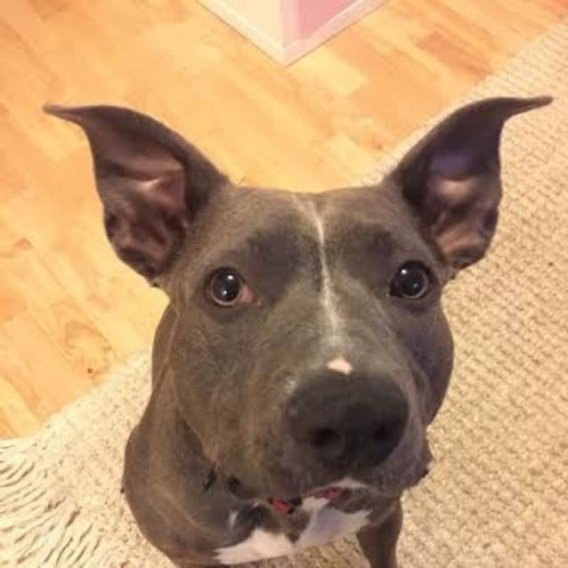 Photo of Opal   Sweet, Loving, Playful!