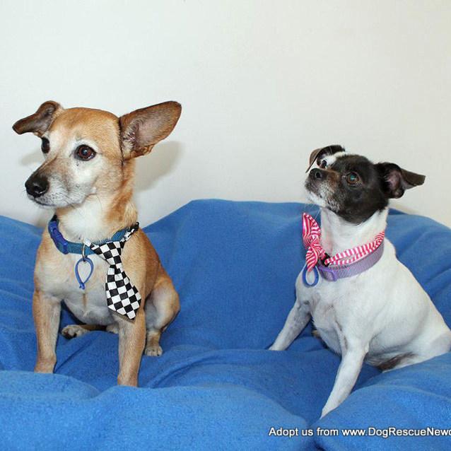 Photo of Tinkerbelle & Jacko ~ Cute Senior Pair