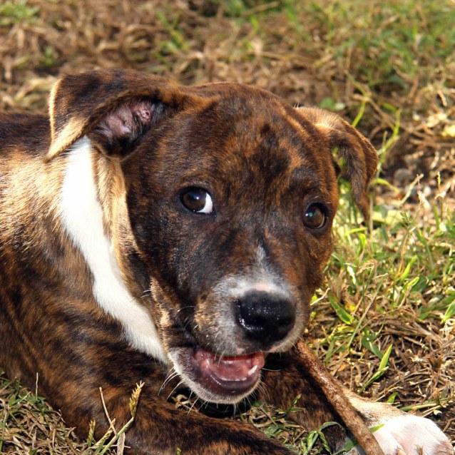 Found Dog Rescue Newcastle