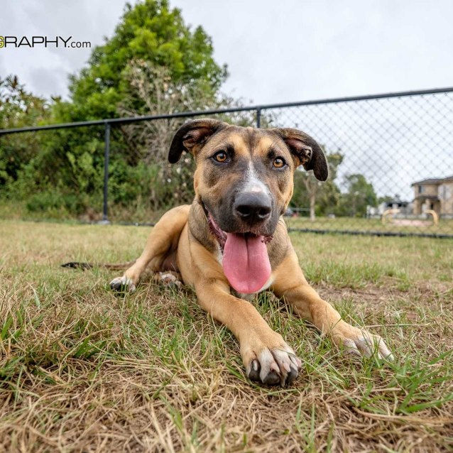 Queensland Animal Dog Rescue Group