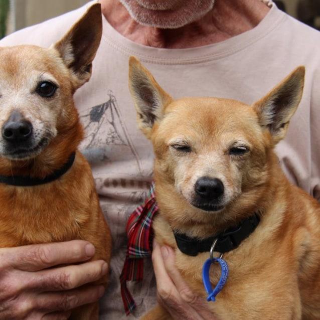 Photo of Dixie (11) & Bat (9) ~ Senior Pair(On Trial 2/5/17