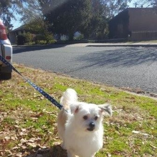 Rescue Dogs Canberra