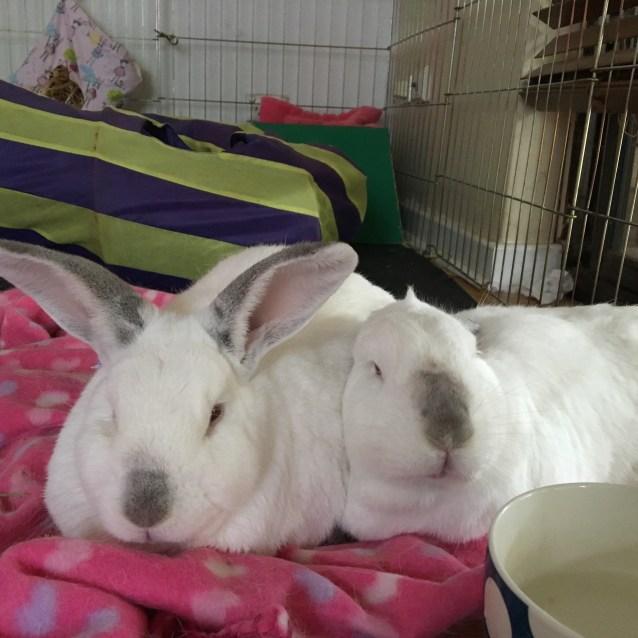 Photo of Bobby And Phoebe