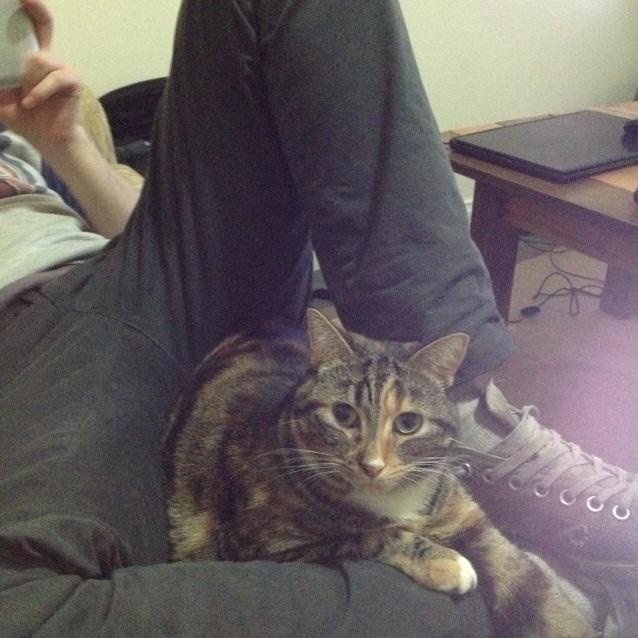 Photo of Sophia (Puss)