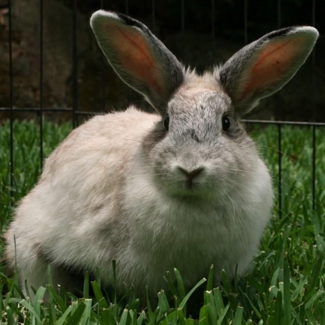 Photo of Alfalfa