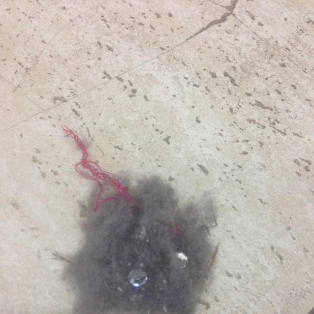 Photo of Dust Bunny