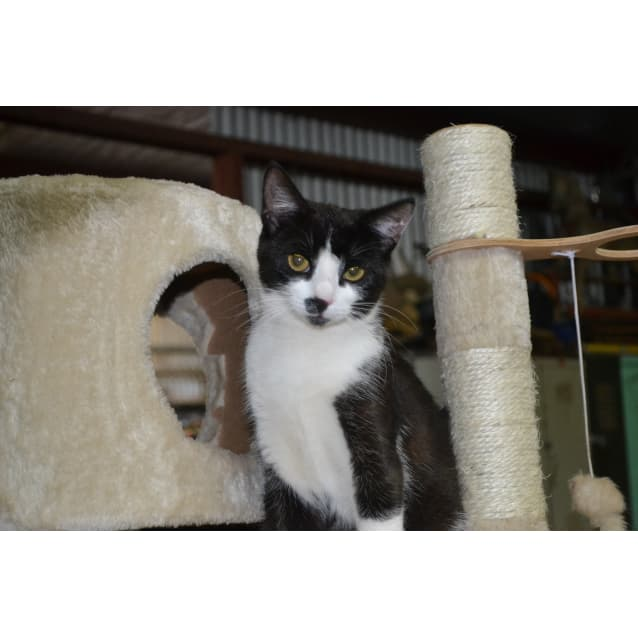 Photo of Bessie N.O.W $80 To Adopt!