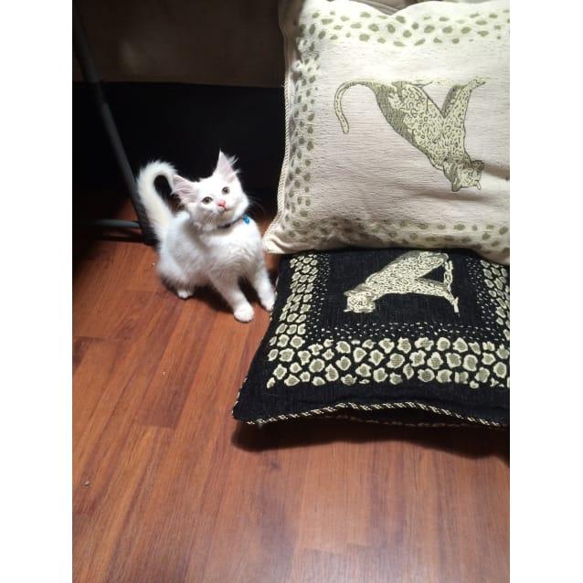 Photo of Dezzy