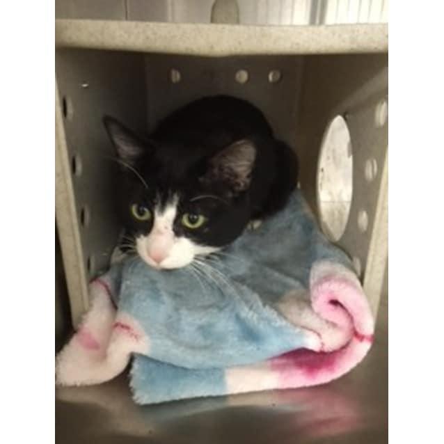Photo of Jasper **Campaign Cat**