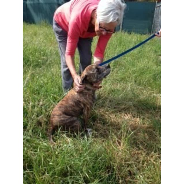 Photo of Maggie  **Reduced Adoption**