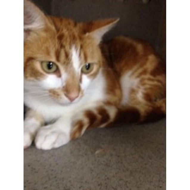 Photo of Apollo **Campaign Cat**