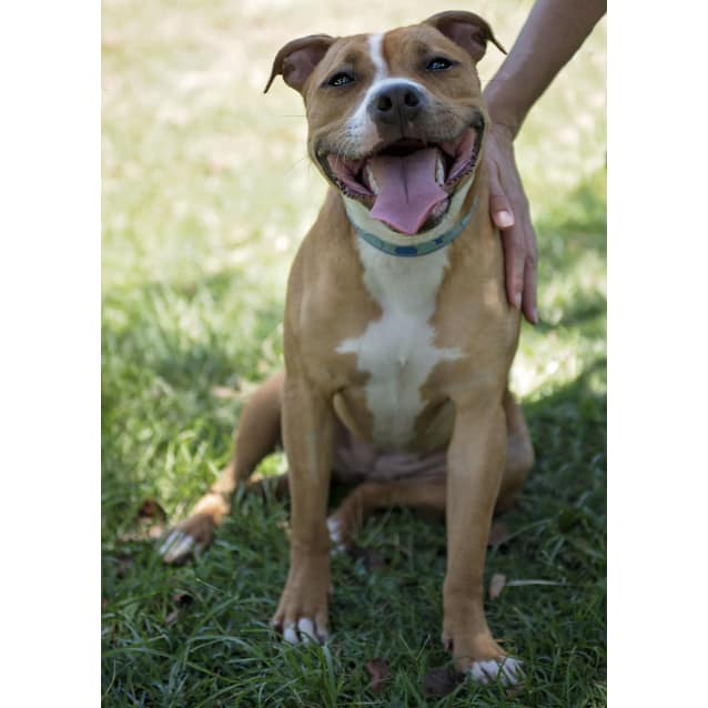 Photo of Lanie   Adoption Pending